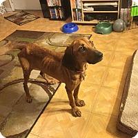 Adopt A Pet :: Martha Stewart - Virginia Beach, VA