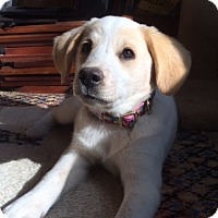 Adopt A Pet :: Oliver - Potomac, MD