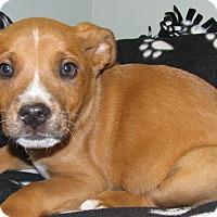 Adopt A Pet :: Tripp - Groton, MA