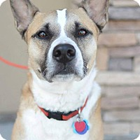 Adopt A Pet :: Radar love - Salt Lake City, UT