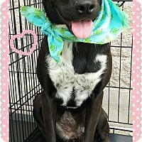 Adopt A Pet :: Nyah - Terrell, TX