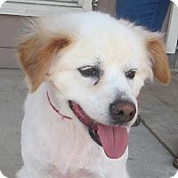 Adopt A Pet :: Merlin needs a loving home - Allentown, PA