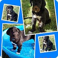 Adopt A Pet :: BFG - San Antonio, TX