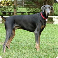 Adopt A Pet :: BUCKEYE - Greensboro, NC