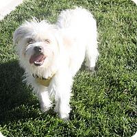 Adopt A Pet :: Wayne - Henderson, NV