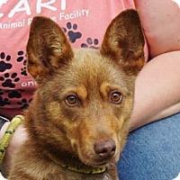 Adopt A Pet :: Claire - LaHarpe, KS