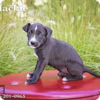 Adopt A Pet :: Blackie - Terre Haute, IN