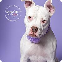 Adopt A Pet :: Trinity - Apache Junction, AZ