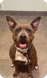 Pit Bull Terrier Mix Dog for adoption in Lancaster, Pennsylvania - Jasmine-Prison trained