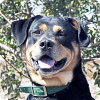 Adopt A Pet :: Wiley - Yreka, CA