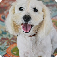 Adopt A Pet :: Harrison - Allentown, VA