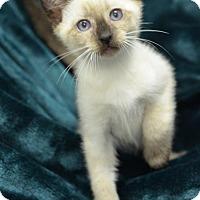 Adopt A Pet :: Haskel161625 - Atlanta, GA