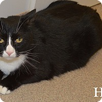 Adopt A Pet :: Hank - Fryeburg, ME