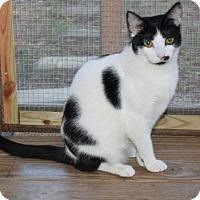 Adopt A Pet :: Mandy - Youngsville, NC