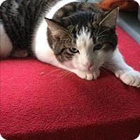 Domestic Mediumhair Kitten for adoption in Woodstock, Virginia - Ruby