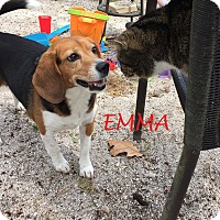 Adopt A Pet :: EMMA - Ventnor City, NJ