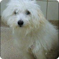 Adopt A Pet :: FRANKIE - Fort Worth, TX