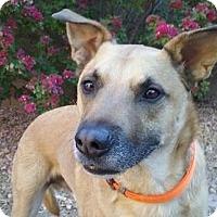 Adopt A Pet :: Jager - Gilbert, AZ