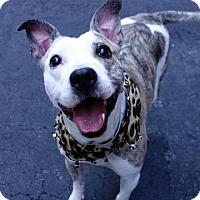 Adopt A Pet :: MO - Boston, MA