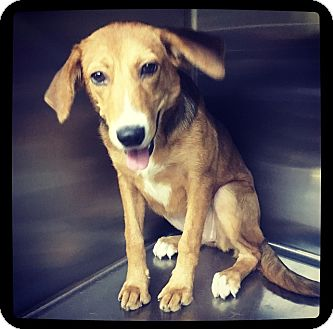 Retriever (Unknown Type) Mix Dog for adoption in Grand Bay, Alabama - Harlyn
