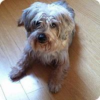 Adopt A Pet :: Mutt - Crossville, TN