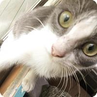 Adopt A Pet :: Kit Kat - Waggaman, LA