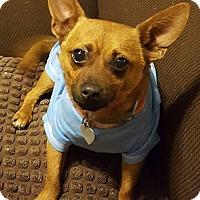 Adopt A Pet :: Axel - Bedminster, NJ