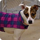 Adopt A Pet :: Colby