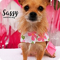 Adopt A Pet :: Sassy - San Antonio, TX