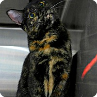 Adopt A Pet :: Emily - Spring Brook, NY
