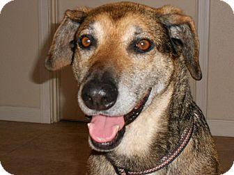 German Shepherd Dog/Hound (Unknown Type) Mix Dog for adoption in Phoenix, Arizona - Jennie