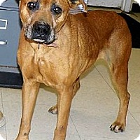 Adopt A Pet :: Misty - Washington Court House, OH