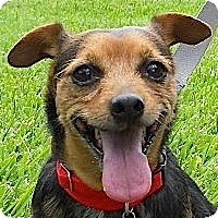 Adopt A Pet :: Rusty - Kingwood, TX