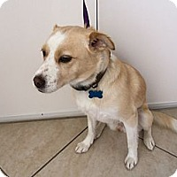 Adopt A Pet :: Sandy - Corona del mar, CA
