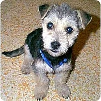 Adopt A Pet :: Gregory - dewey, AZ