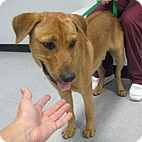Adopt A Pet :: Max - Kingwood, TX