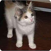 Adopt A Pet :: Precious - Irvine, CA