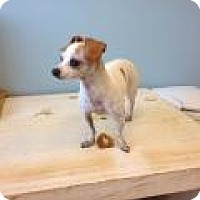 Adopt A Pet :: Rita - Shawnee Mission, KS