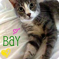 Adopt A Pet :: Bay - Audubon, NJ