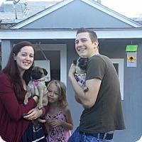 Adopt A Pet :: Dorrie - Sacramento, CA