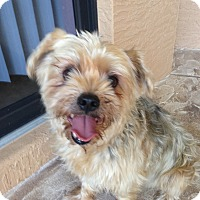 Adopt A Pet :: O'Harley - North Port, FL