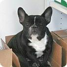Adopt A Pet :: Beatrice