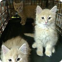 Adopt A Pet :: Declan - Byron Center, MI