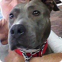 Adopt A Pet :: Stella - Las Vegas, NV