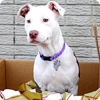 Adopt A Pet :: Arizona - Detroit, MI