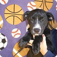 Adopt A Pet :: Mac - Oviedo, FL