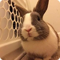 Adopt A Pet :: Panda - Conshohocken, PA