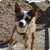 Adopt A Pet :: Jack - Peyton, CO