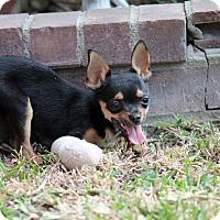 Adopt A Pet :: Geller - Austin, TX