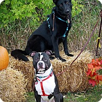 Adopt A Pet :: Dragon&Thor *Courtesy Cupids** - West Allis, WI